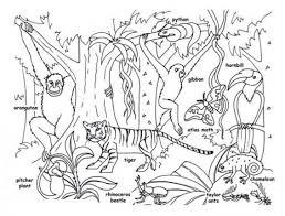 Rainforest Animals For Kids Printable Rainforest Animal Coloring ...