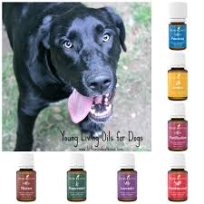 Thieves Oil Dilution Young Living Essential Oils For Dogs