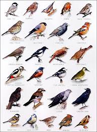 Garden Bird Chart Art Bird Identification Birds Wild Birds