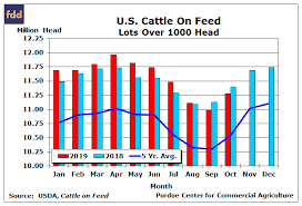 Steer Feeding Chart Cattle Feeders Place More Heifers On Feed Farmdoc Daily