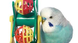 what are the best bird toys pet bird