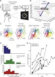 New neural activity patterns emerge with long-term learning | PNAS