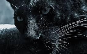Free download Black jaguar wallpaper SF ...