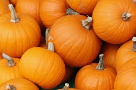 "Image result for pumpkins ""org"""