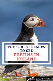 our deled guide to where to see puffins in iceland we ll share with
