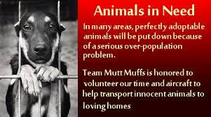 Welcome To Mutt Muffs