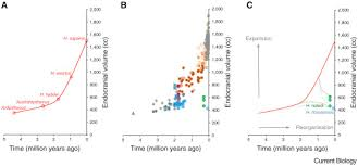Hominin Chart Hominin Brain Evolution The Only Way Is Up Sciencedirect