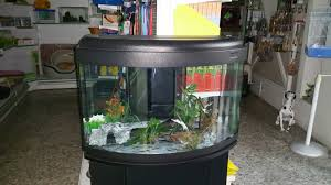 Pirana aquarium negozio di acquari: il primo acquario