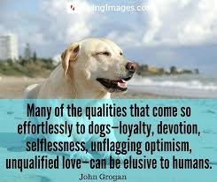 Dog Quotes Inspirational Cool Dog Quotes Inspirational 48 Famous Dog Quotes Stunning Pitbull Dog
