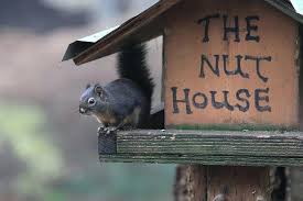 squirrel in house squirrel photograph squirrel in the nut house by gray squirrel house plans