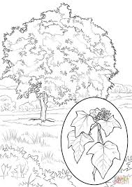 Small Picture Candlenut Tree coloring page Free Printable Coloring Pages