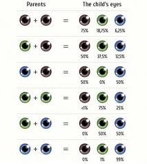 Eye Genetics Chart All About The Eye Color Genetics Chart