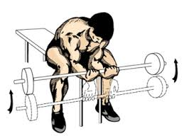 Image result for barbell wrist curl