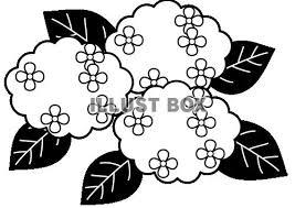 無料イラスト 紫陽花の花白黒
