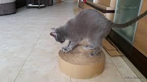 для кошек | Записи в рубрике для кошек | Дневник Ольга_Не-ва ...
