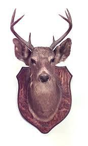 deer head on wall rustic taxidermy mounted deer head wall plaque on oak shield shaped backing deer head on wall