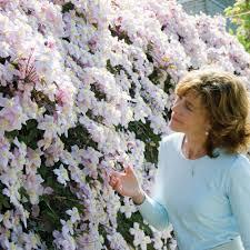 Discover Top Shade Perennials  Shade Perennials Ground Covering Climbing Plants That Like Shade