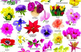 List Of Flowers Flower Types Chart List Of Cut Flowers With