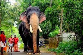 Kerala Elephant Mangalamkunnu Ayyappan ...
