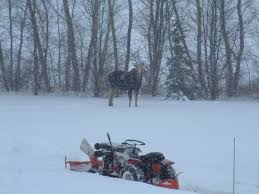 pics of snow rigs allischalmers forum page 1 moose wandered in when i was blowing the simplicity no snow yet this year just cold and ice here is a past year moving snow piles back