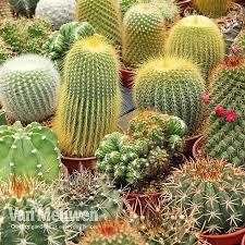 Cactus Mix   Van Meuwen