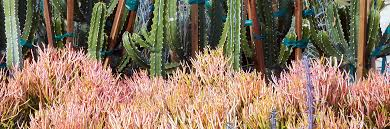 desert botanical garden spring plant