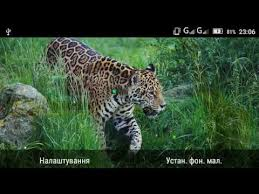 live jungle animals. Delighful Live Jungle Animals Live Wallpaper Throughout Live