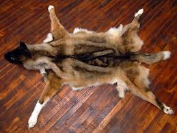 bear skin rugs without head