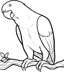 Cute Parrot Coloring Pages free printable parrot coloring pages for kids on parrot outline template