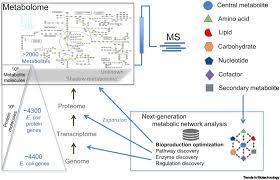 Nicholson Metabolic Pathways Chart Dynamic Metabolomics For Engineering Biology Accelerating