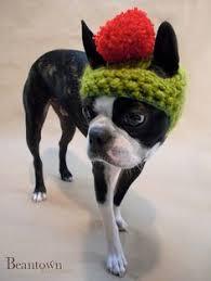 Crochet Dog Hat Pattern Extraordinary Crochet Dog Hat Pattern Ideas Best Collection I Love To Be Warm