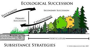 Primary And Secondary Succession Venn Diagram Interactions Within Ecosystems 244824513672 Flow Chart Primary