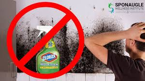 what to use to kill mold. Wonderful Mold DONT USE BLEACH How To Kill Black Mold Safely And What To Use Kill Mold