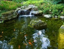garden pond design tips