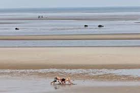 Skaket Beach Orleans Ma Tide Chart Skaket Beach Low Tide Travel Guide