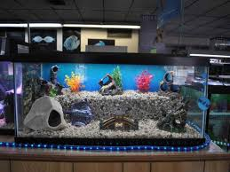 Smashing Fish Tank Ornaments Fish Tank Ornaments S Tips To Get Fish Tanks  in Cool Fish