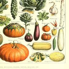 Gourd Identification Chart Vintage Poster Print Art Kitchen Vegetable Identification Reference Chart Carrot Pumpkin Potato Botanical Science Plant Wall Decor 12 99 X 19 69