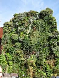 Small Picture 1009 best Green Walls Exterior images on Pinterest Vertical