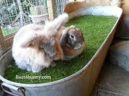 bunny home idea