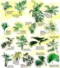 156 Best Palm Garden Images In 2019 Palm Garden Palm