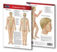 Details About Acupuncture Points Chart Pocket Size Laminated Quick Reference Guide