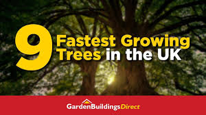 Tree Growth Rates Chart Uk A Guide To The 9 Fastest Growing Uk Trees