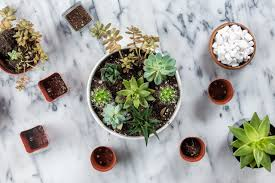 tips for how to grow succulents