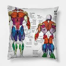 Anatomy Chart Muscle Diagram