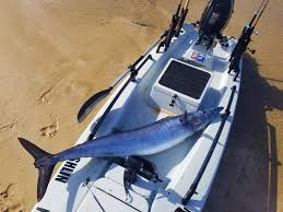 solo skiff with custom rigging and large fish
