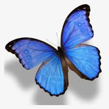 Decorate windows, personalize water bottles, or butterfly illustration butterfly drawing butterfly painting butterfly design vintage butterfly tattoo butterfly images blue painting monarch butterfly. Monarch Butterfly Morpho Menelaus Morpho Amathonte Black With Blue Monarch Butterfly Hd Png Download Kindpng