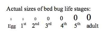 Bed bug sizes Penny Bed Bug Actual Size Chart Bed Bugs Handbook Bed Bugs Pictures Actual Size Stages And Skin Bites