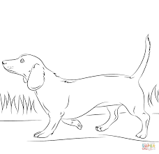 Dachshund Dog Coloring Page Free Printable Pages Within Wpvoteme