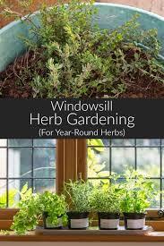 growing your own windowsill herb garden