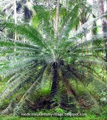Medicinal Plants And Their Malayalam Names Iqsoft Unhackable Blog